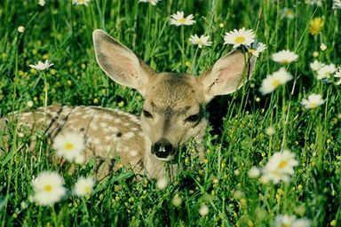 deer[1].jpg